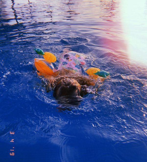 Schwimmflügel_Ananas